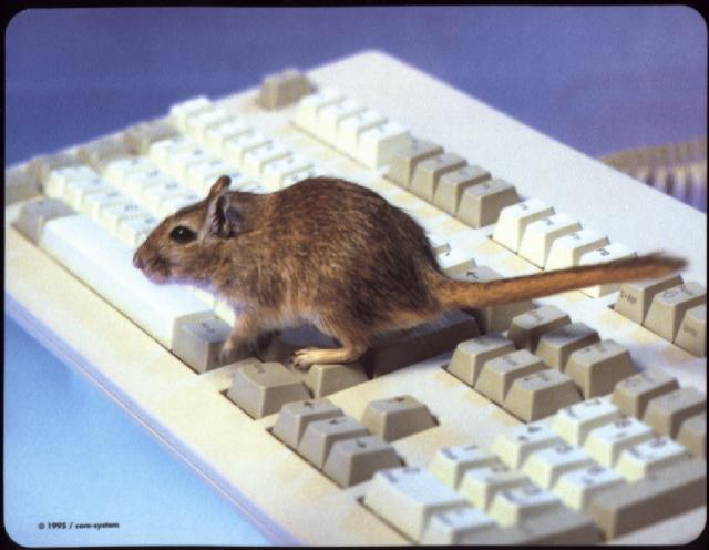 mousekeys.jpg