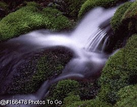 STREAMS AND MOSS